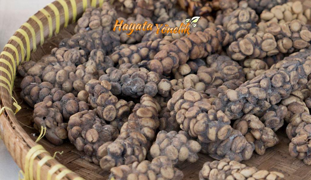 dunyanin-en-pahali-kahvesi-kopi-luwak